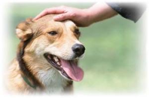 patting-dog